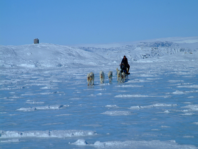 Dog Sledding In Kulusuk