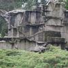 Dreams - A Rock Facade In Artis