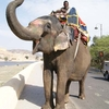 Elephant Rides Into Amber Fort