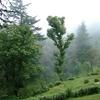 Cloud End Trail - Mussoorie