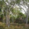 Area Around Ubirr Rockart Site