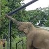 Dublin Zoo Elephant
