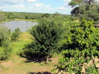 Djuma Game Reserve