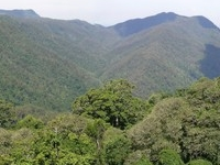 Dorrigo National Park