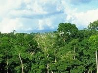 Dzanga Sangha Reserva Especial