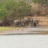 Elephants In The Selous Game Reserve