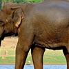 Kurinjimala Wildlife Sanctuary