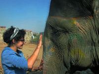 Volunteer Elephants India