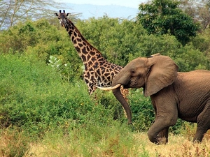 07 Days / 06 Nights Trip Best Of Tanzania Photos