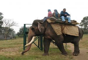 Elephant Safari And Feeding Camp