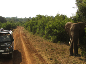 Wildlife Safari at Tsavo East and West National Park Fotos