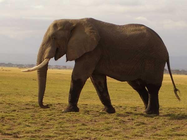 Masai Mara Safari 4 Days Photos