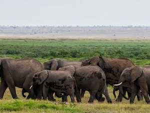 2 Days Great Amboseli Safari Photos