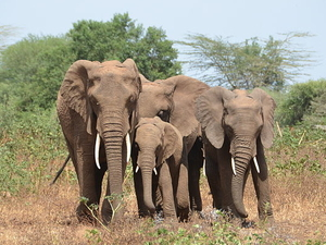 Northern Budget Safari Circuit 4 Days in Tanzania