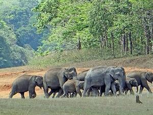 Gods Own Country Kerala Trail, Thekkady