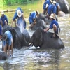 Elephants In Lampang