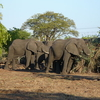Elephants, Mosi-oa-Tunya National Park