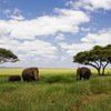 Tarangire Safari Package