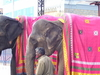 Elephants Welcoming Lord Srinivasa
