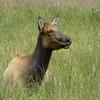 Elk Prairie Trail