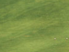 El Saler Golf Course. Valencia