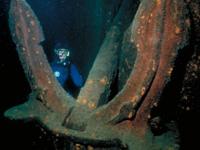 Emperor Diving Spot