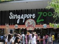 Zoológico de Cingapura