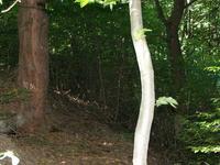 Erdőbénye Sylvpasture Natural Reserve