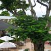 Ex Tum George Hotel Manzini Swaziland