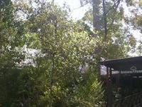 Brisbane Forest Park