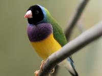 Keep River Important Bird Area