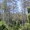 Black Bulga State Conservation Area