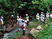 Fairy Stream - Suoi Tien