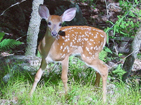 Malsi Deer Park
