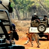 Fruitful Jungle Safari At Tadoba Tiger Reserve