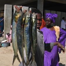 Fish Market - Nouakchott