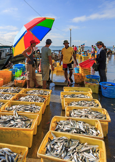 Fish Market In Sandakan
