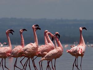 3 Nights 4 Days Masai Mara and Lake Nakuru Safari