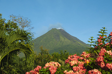 Flowers Around Arenal Volcano