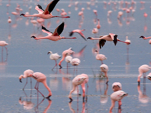 7 Days Tanzania Flamingo Safari