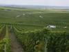 Vineyard In Champagne-Ardenne