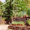 Mildred E. Mathias Botanical Garden