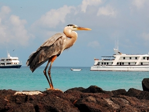 Galapagos Travel Deals Photos