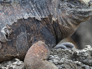 Amazing Galapagos Photos