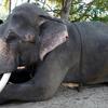 Ganapatipule-Elephant Ride