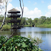 Gatorland Breeding Marsh Orlando
