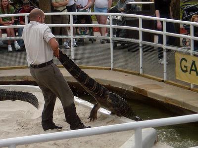 Gatorland Trainer