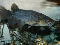 Genesis Energy Freshwater Aquarium