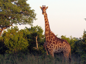 Kruger Safari Package Photos