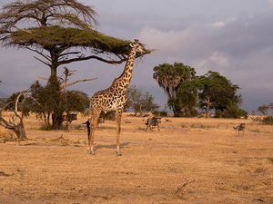 14 Days Southern Tanzania Safari Photos